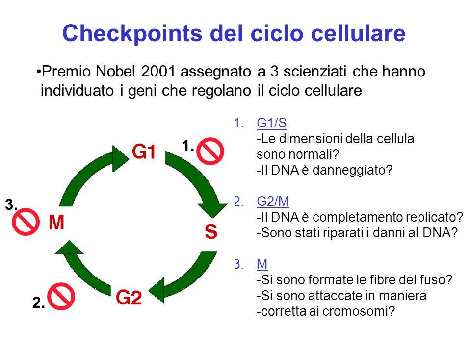 Checkpoints del ciclo cellulare
