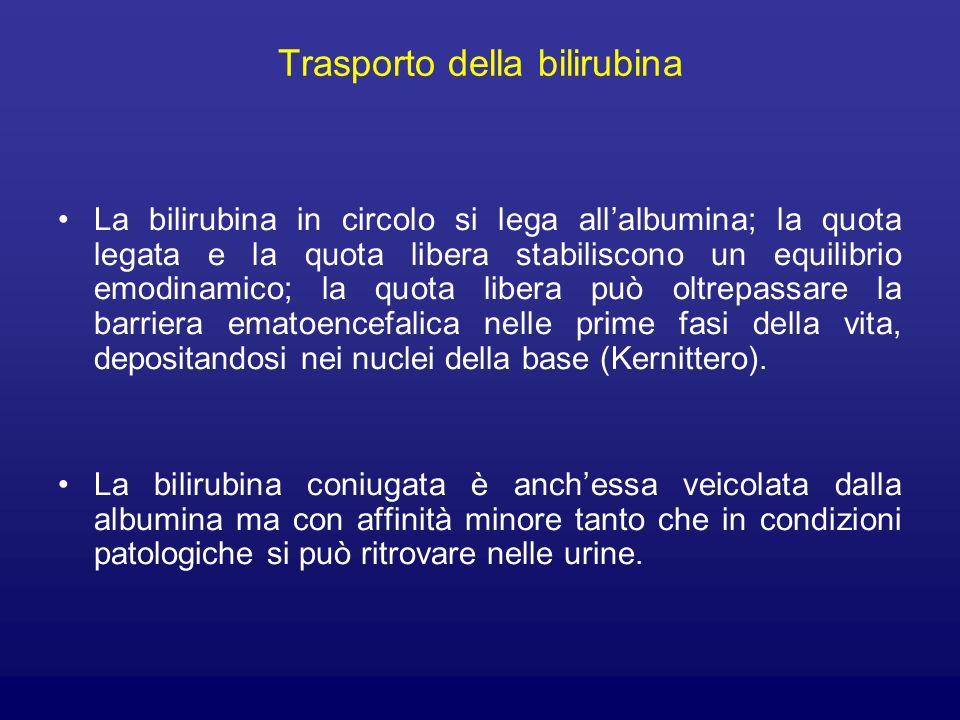 Trasporto della bilirubina