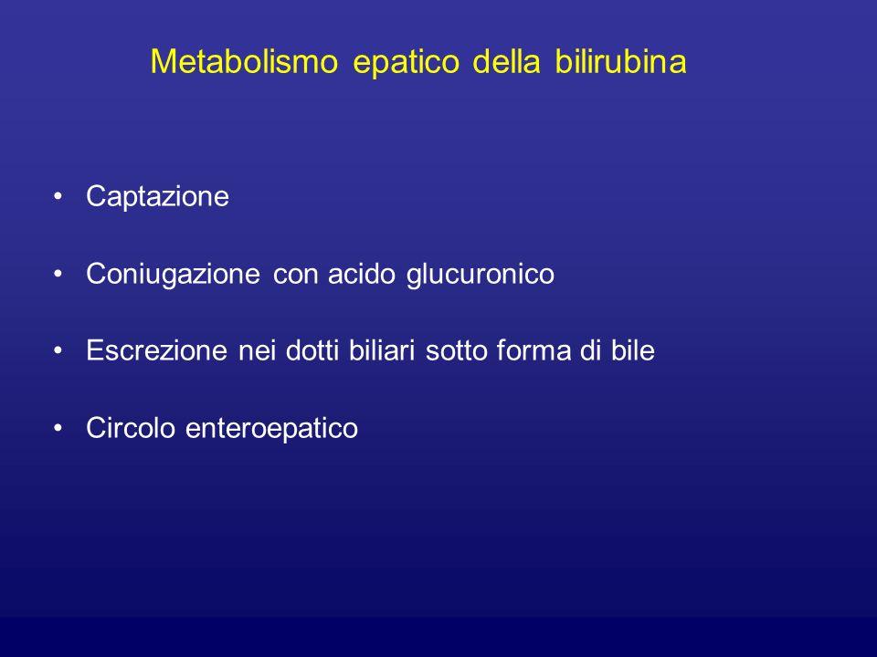 Metabolismo epatico della bilirubina
