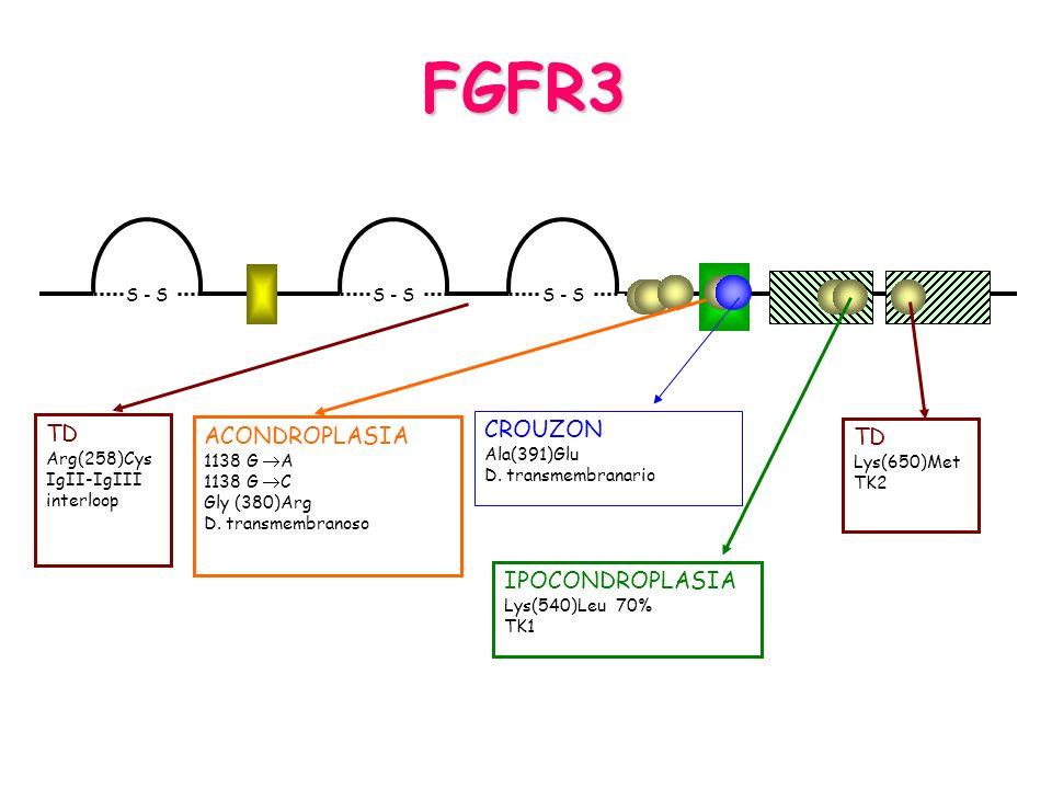 FGFR3 CROUZON TD ACONDROPLASIA TD IPOCONDROPLASIA S - S Ala(391)Glu