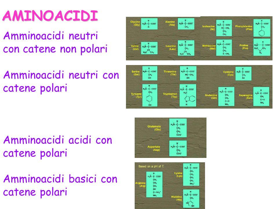 AMINOACIDI Amminoacidi neutri con catene non polari