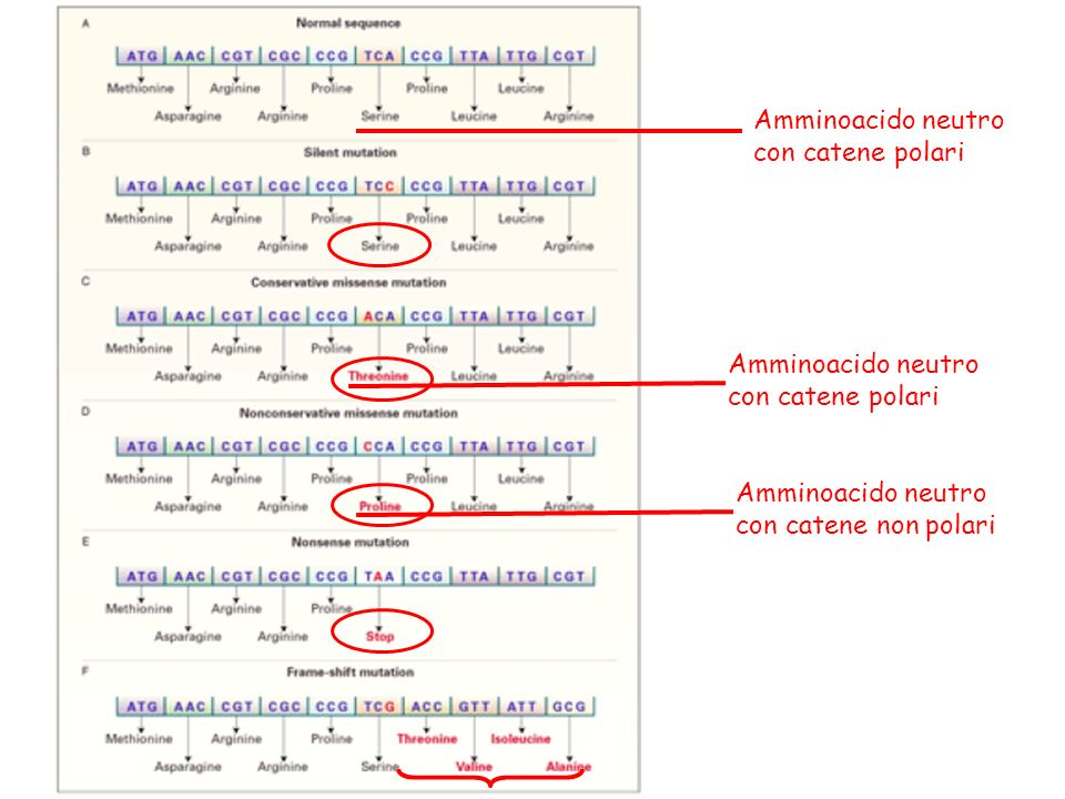 Amminoacido neutro con catene polari. Amminoacido neutro. con catene polari. Amminoacido neutro.