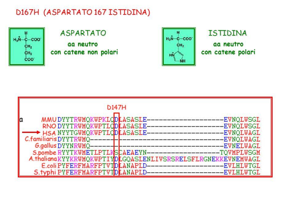 D167H (ASPARTATO 167 ISTIDINA)