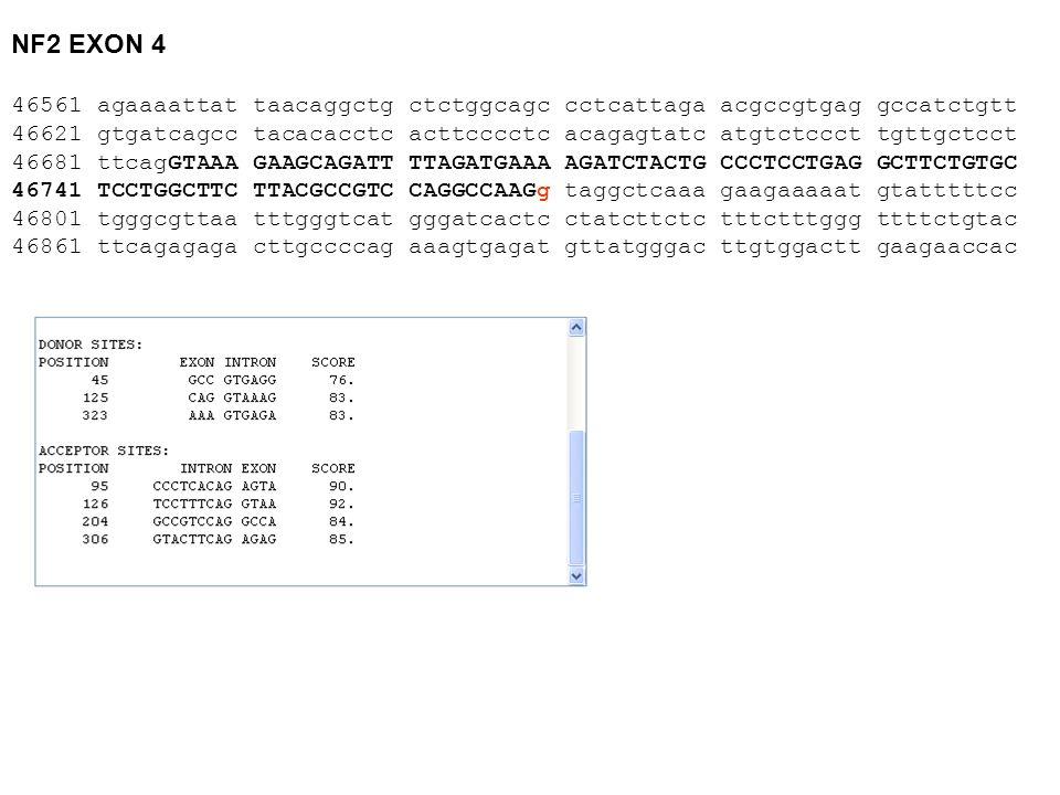 NF2 EXON 4 46561 agaaaattat taacaggctg ctctggcagc cctcattaga acgccgtgag gccatctgtt.