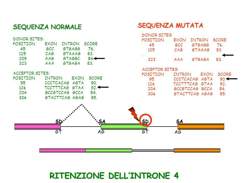 RITENZIONE DELL'INTRONE 4