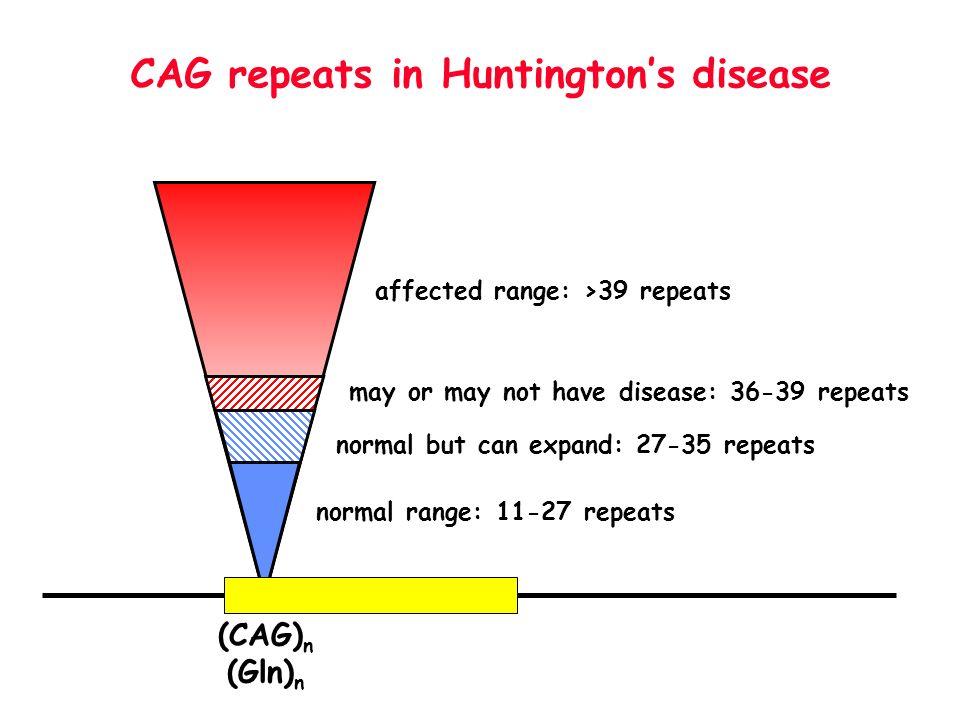 CAG repeats in Huntington's disease