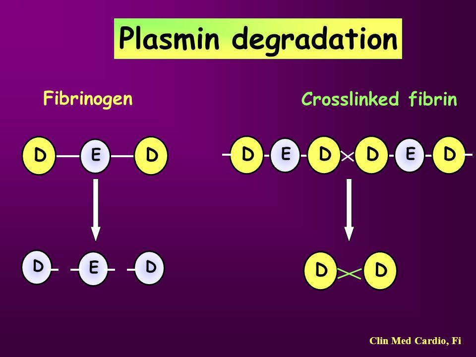 Plasmin degradation Fibrinogen Crosslinked fibrin D D D D D D D D E E