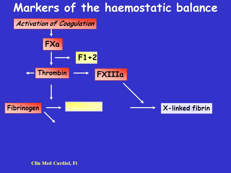 Markers of the haemostatic balance