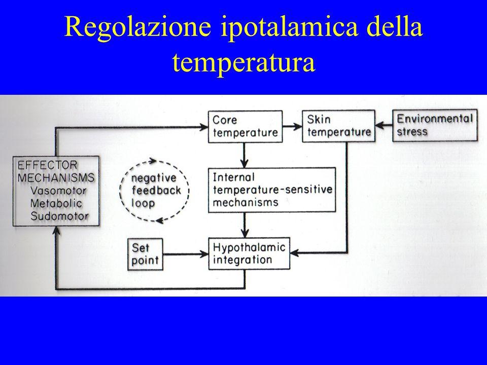 Regolazione ipotalamica della temperatura
