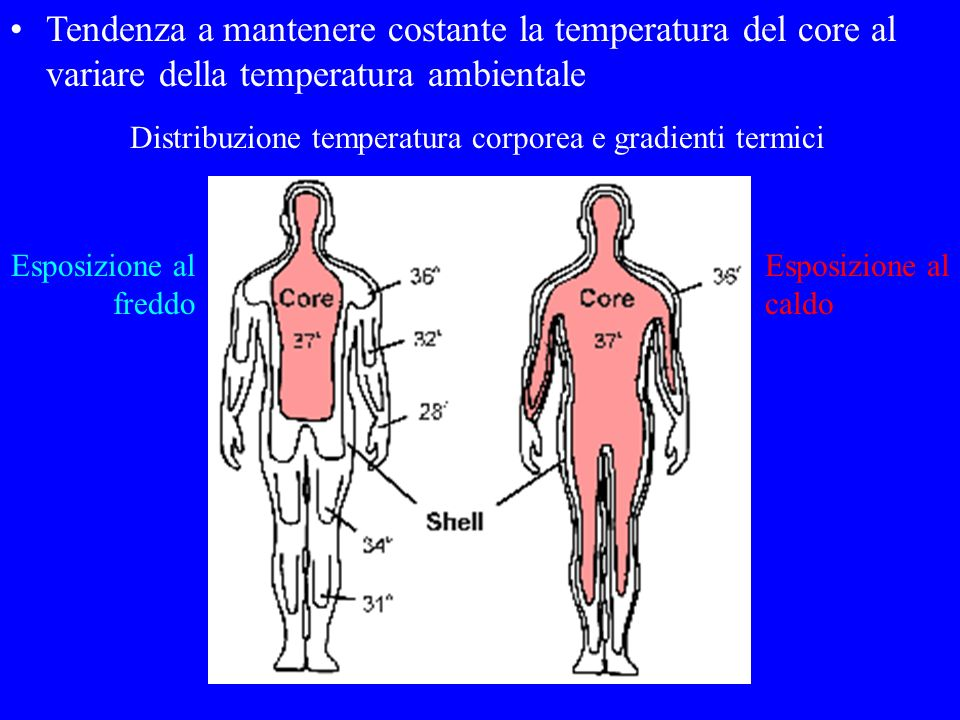 Tendenza a mantenere costante la temperatura del core al variare della temperatura ambientale