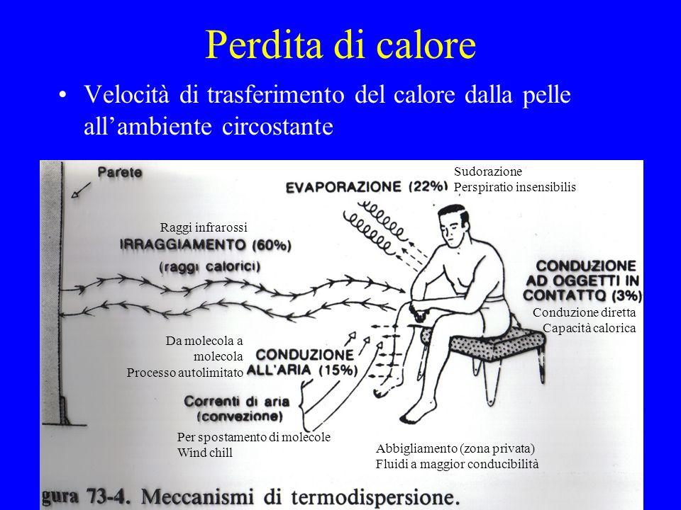 Perdita di caloreVelocità di trasferimento del calore dalla pelle all'ambiente circostante. Sudorazione.