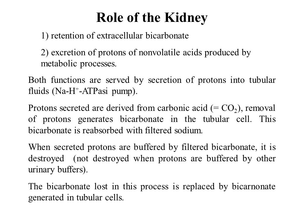 Role of the Kidney 1) retention of extracellular bicarbonate