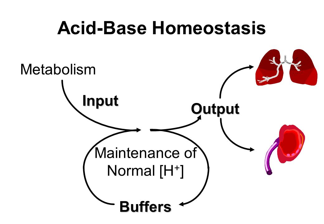 Acid-Base Homeostasis