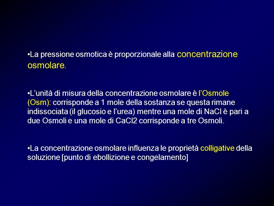 La pressione osmotica è proporzionale alla concentrazione osmolare.