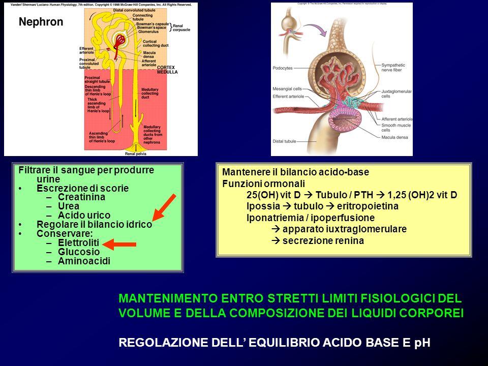 REGOLAZIONE DELL' EQUILIBRIO ACIDO BASE E pH