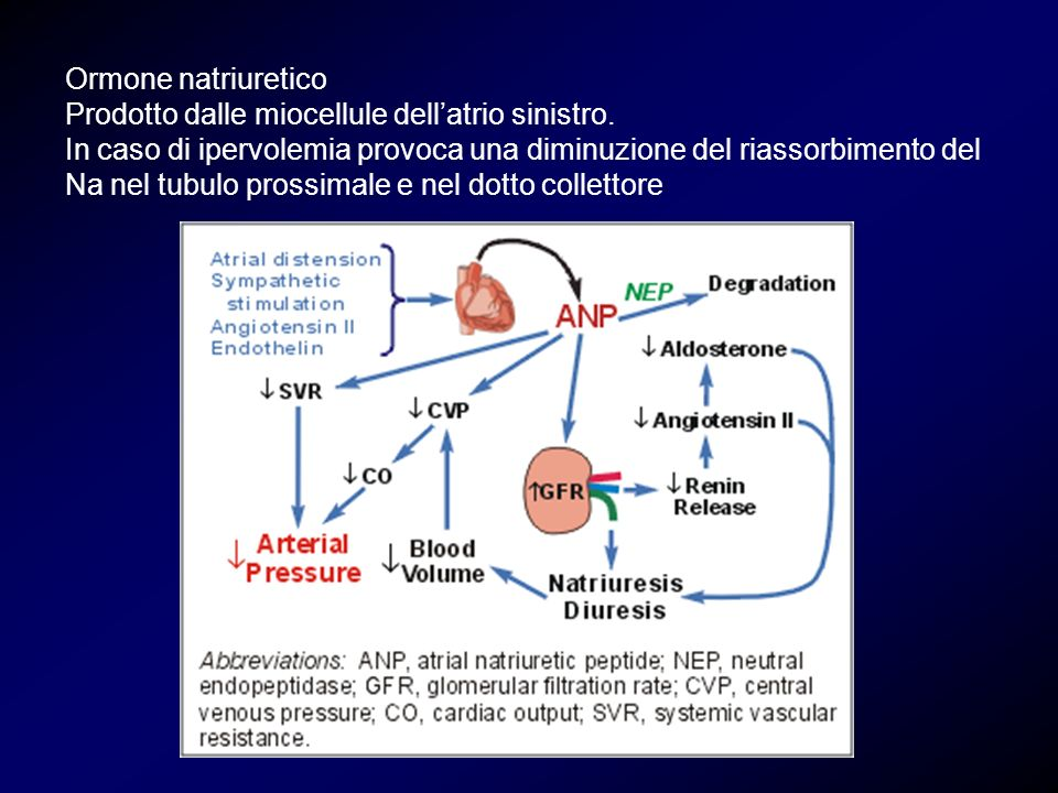 Ormone natriuretico Prodotto dalle miocellule dell'atrio sinistro.