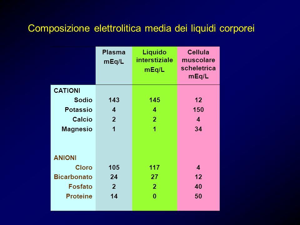 Liquido interstiziale Cellula muscolare scheletrica mEq/L