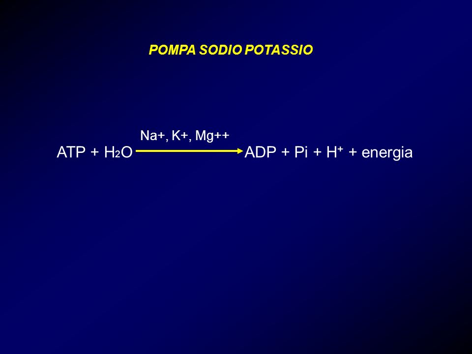 ATP + H2O ADP + Pi + H+ + energia