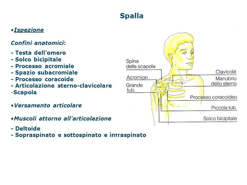 Spalla Ispezione Confini anatomici: - Testa dell'omero