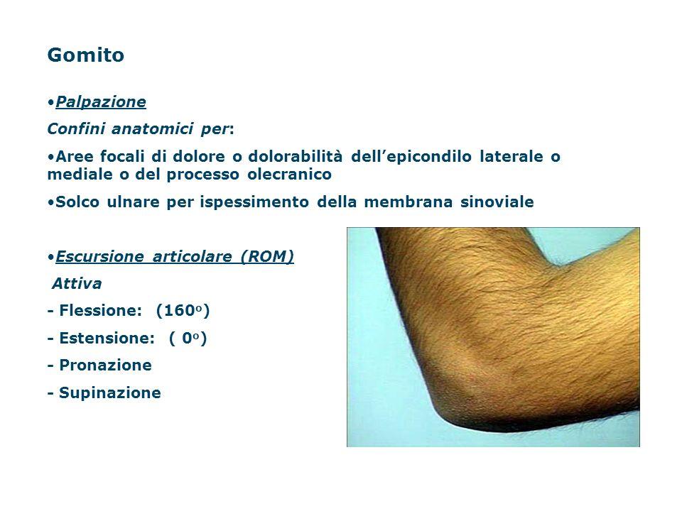 Gomito Palpazione Confini anatomici per: