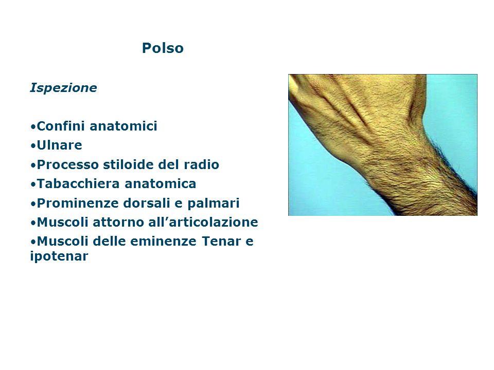 Polso Ispezione Confini anatomici Ulnare Processo stiloide del radio