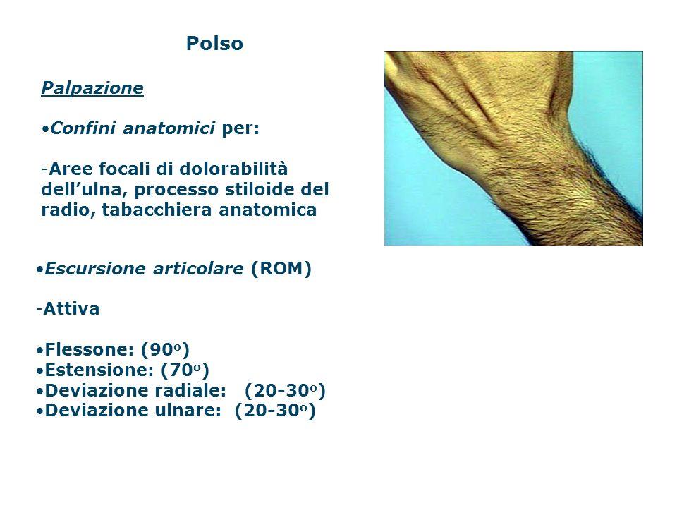 Polso Palpazione Confini anatomici per: