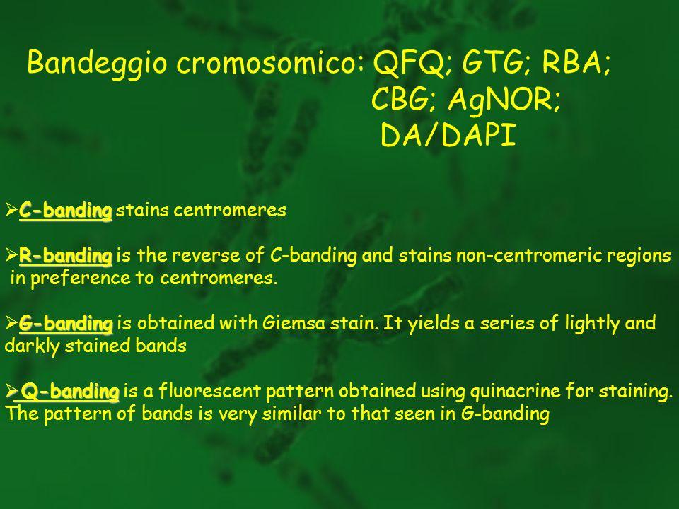 Bandeggio cromosomico: QFQ; GTG; RBA; CBG; AgNOR; DA/DAPI