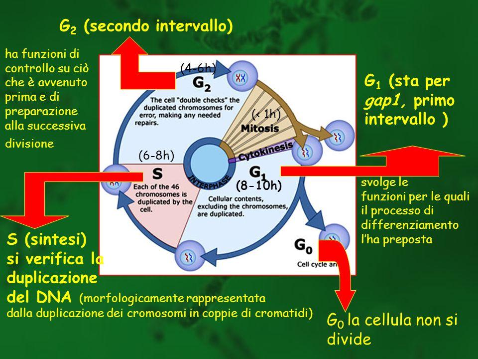 G2 (secondo intervallo)