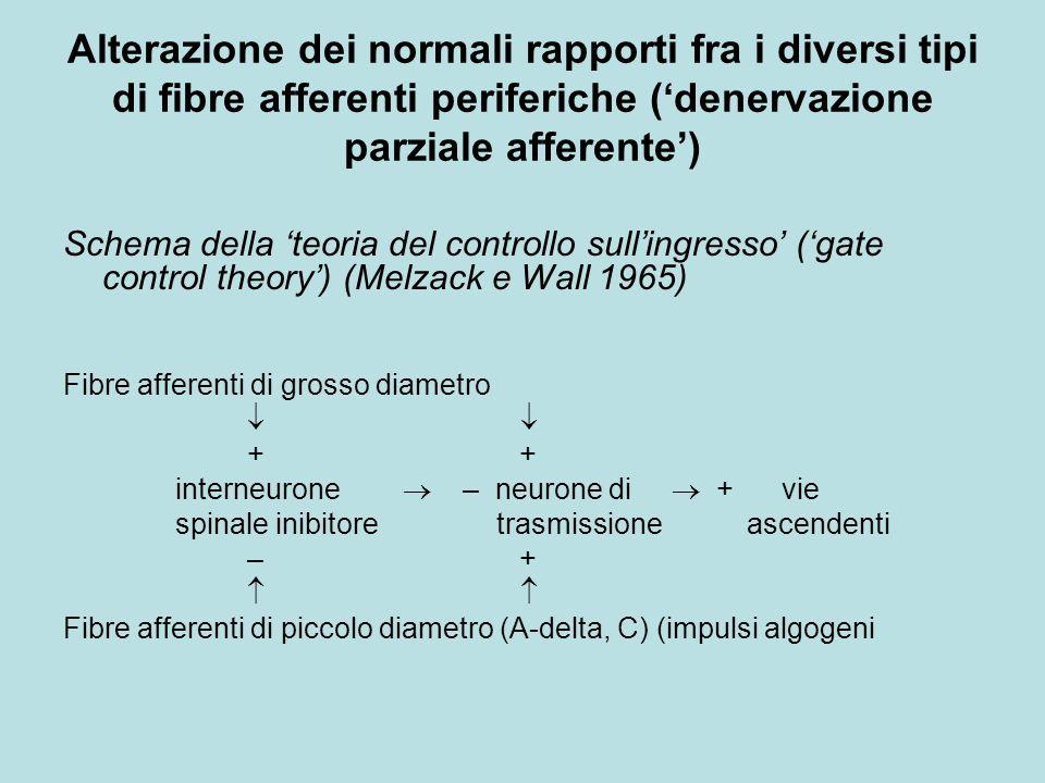 Alterazione dei normali rapporti fra i diversi tipi di fibre afferenti periferiche ('denervazione parziale afferente')