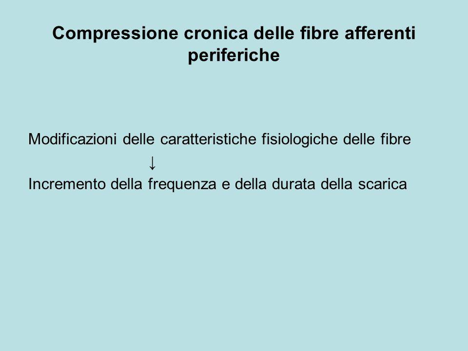 Compressione cronica delle fibre afferenti periferiche