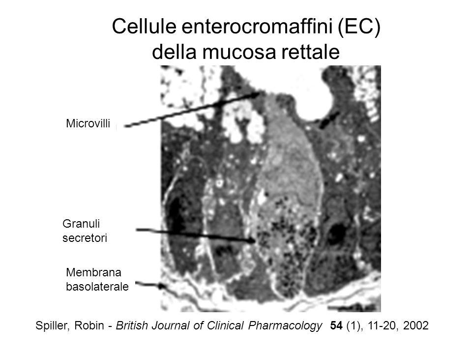 Cellule enterocromaffini (EC) della mucosa rettale
