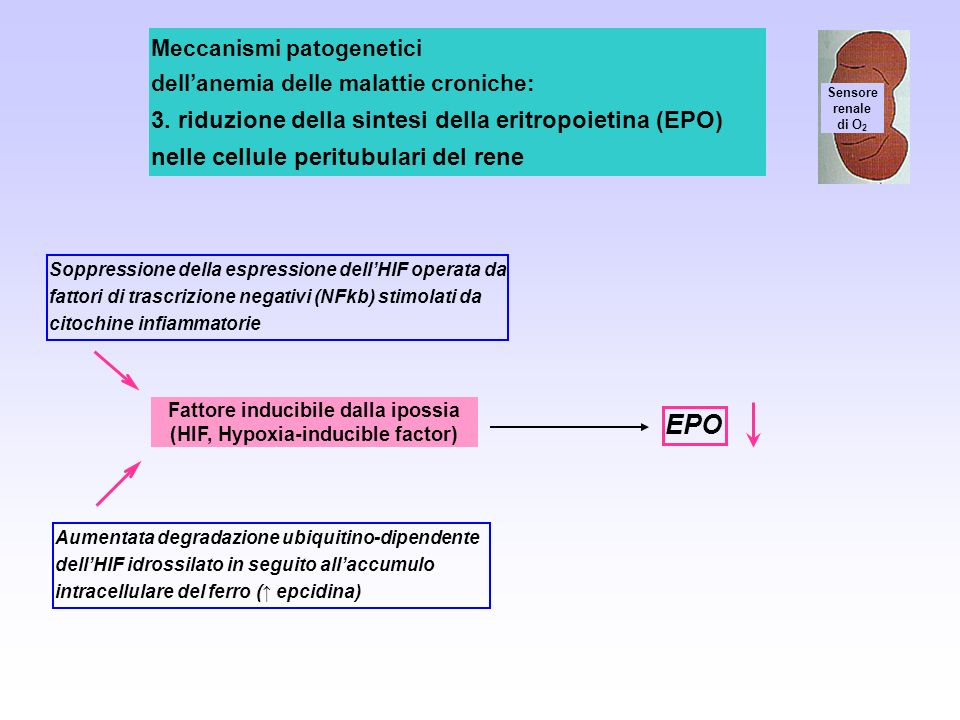 Fattore inducibile dalla ipossia (HIF, Hypoxia-inducible factor)