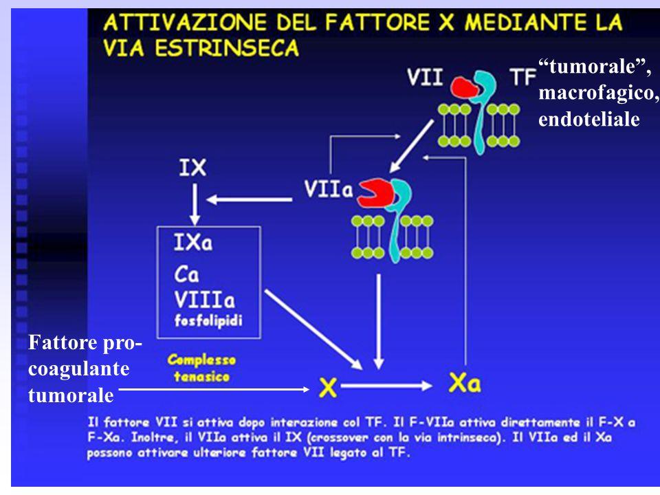 tumorale , macrofagico, endoteliale Fattore pro- coagulante tumorale