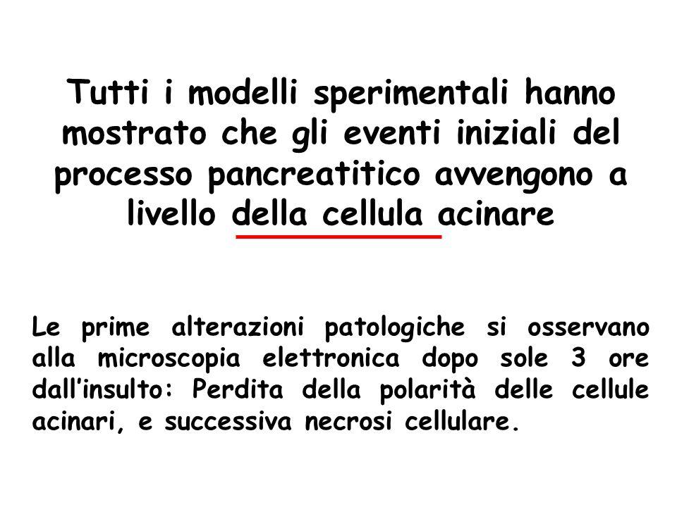 Tutti i modelli sperimentali hanno mostrato che gli eventi iniziali del processo pancreatitico avvengono a livello della cellula acinare