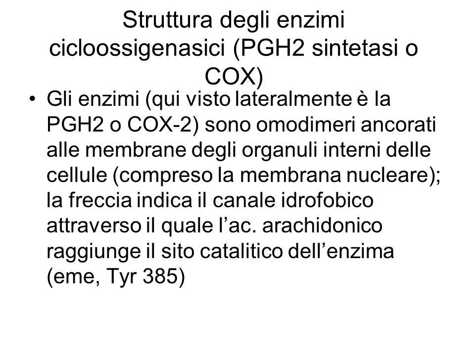 Struttura degli enzimi cicloossigenasici (PGH2 sintetasi o COX)