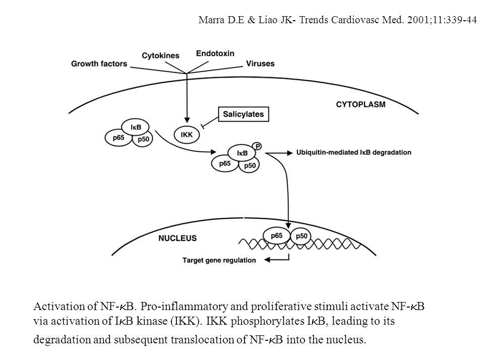 Marra D.E & Liao JK- Trends Cardiovasc Med. 2001;11:339-44