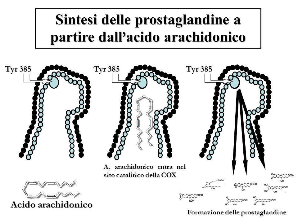 Sintesi delle prostaglandine a partire dall'acido arachidonico