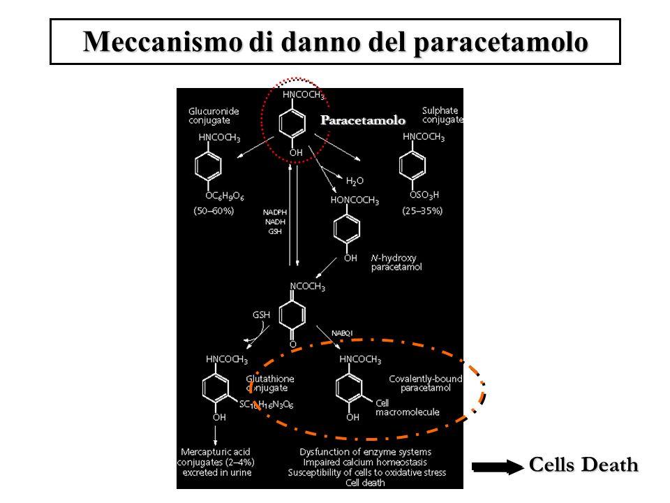 Meccanismo di danno del paracetamolo