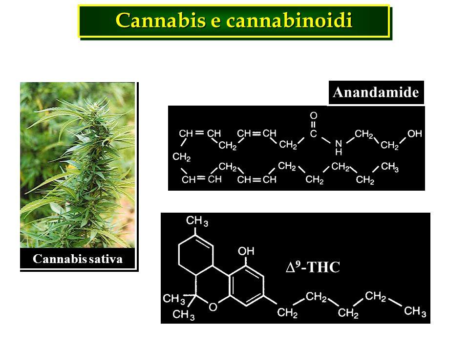 Cannabis e cannabinoidi