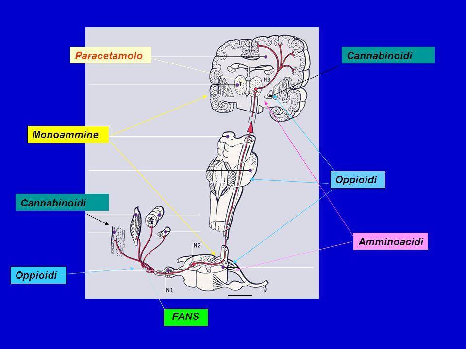 Paracetamolo Cannabinoidi Monoammine Oppioidi Cannabinoidi Amminoacidi Oppioidi FANS