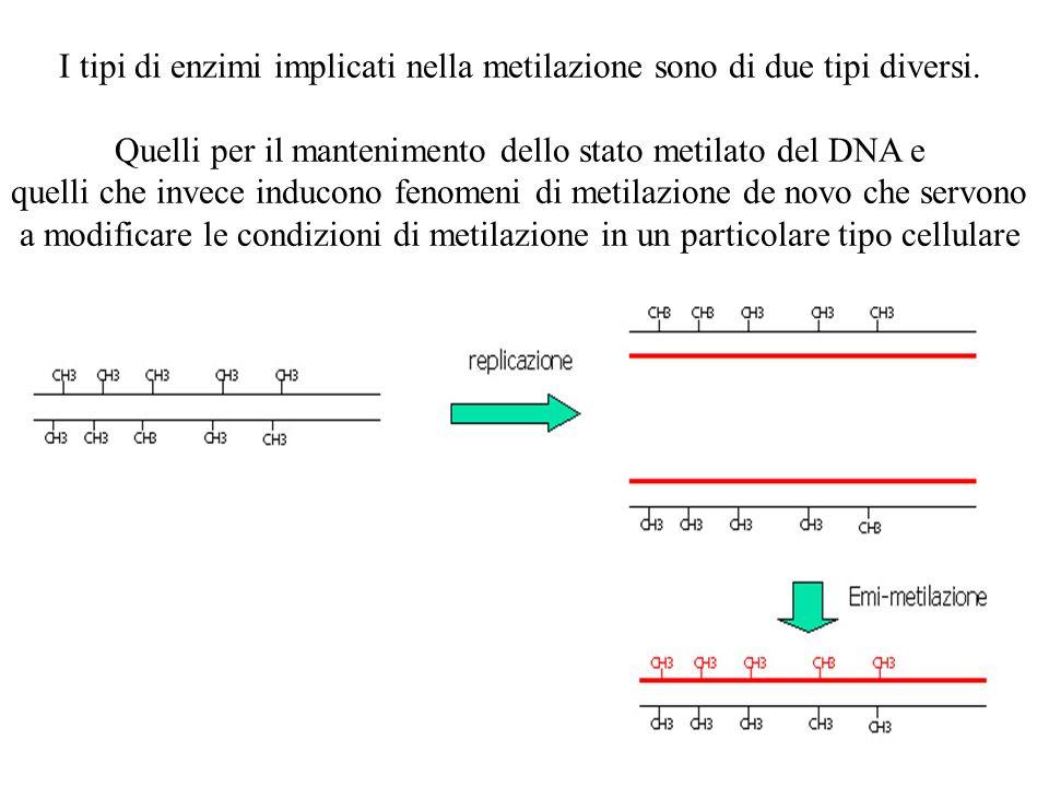 I tipi di enzimi implicati nella metilazione sono di due tipi diversi.