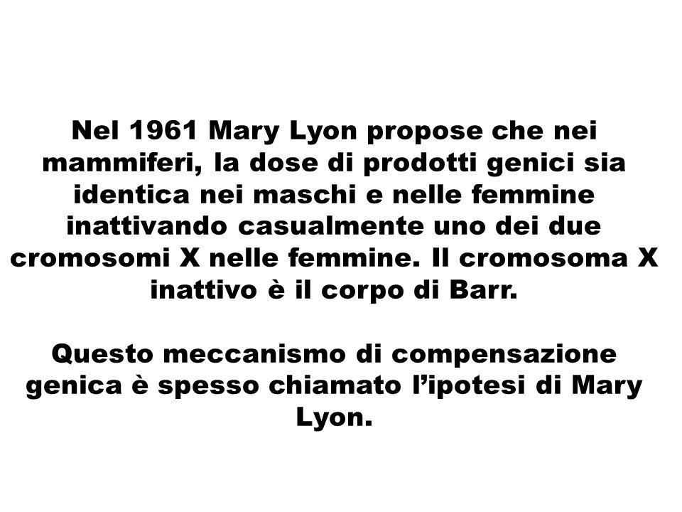 Nel 1961 Mary Lyon propose che nei mammiferi, la dose di prodotti genici sia identica nei maschi e nelle femmine inattivando casualmente uno dei due cromosomi X nelle femmine. Il cromosoma X inattivo è il corpo di Barr.