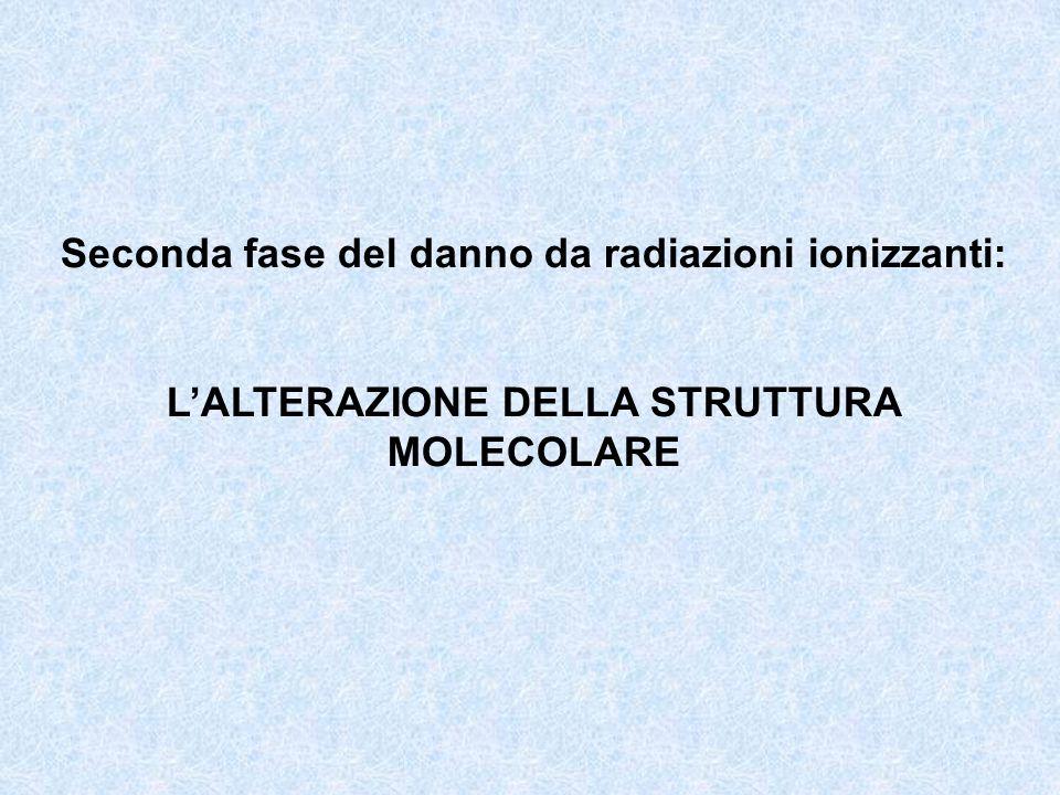 Seconda fase del danno da radiazioni ionizzanti: