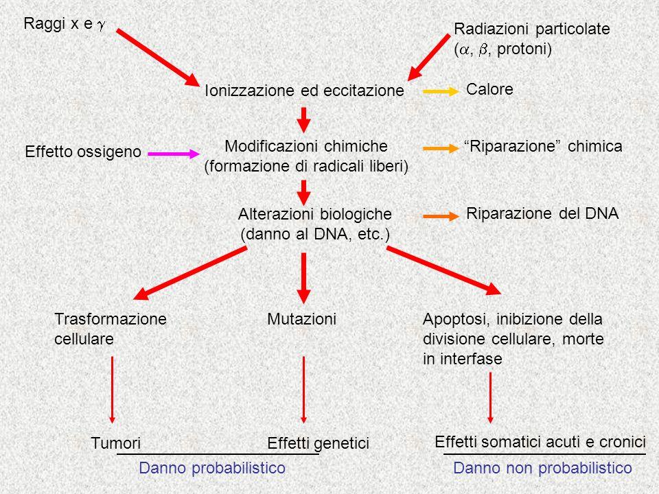 Radiazioni particolate (a, b, protoni)