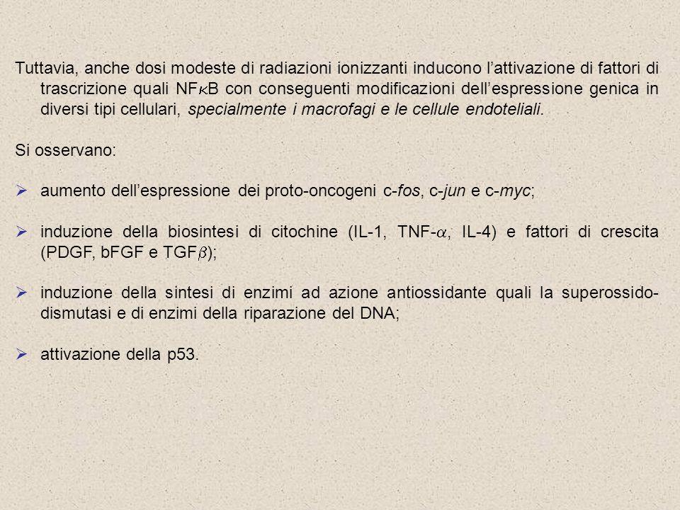Tuttavia, anche dosi modeste di radiazioni ionizzanti inducono l'attivazione di fattori di trascrizione quali NFkB con conseguenti modificazioni dell'espressione genica in diversi tipi cellulari, specialmente i macrofagi e le cellule endoteliali.