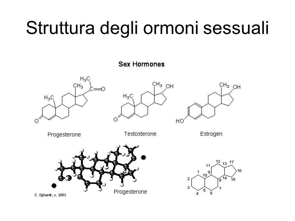 Struttura degli ormoni sessuali