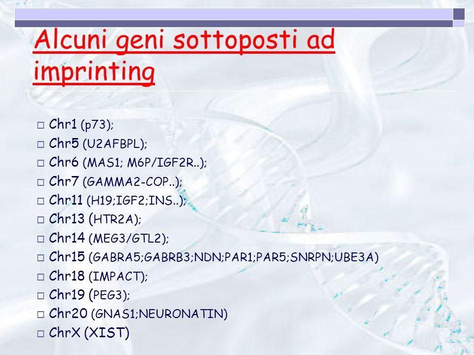 Alcuni geni sottoposti ad imprinting