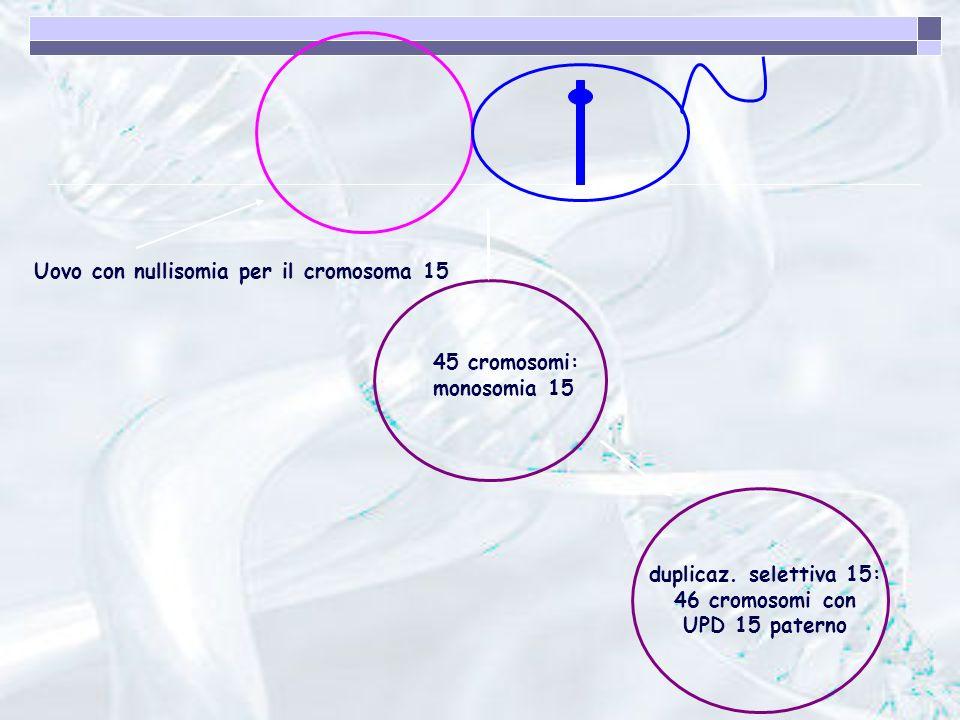 Uovo con nullisomia per il cromosoma 15