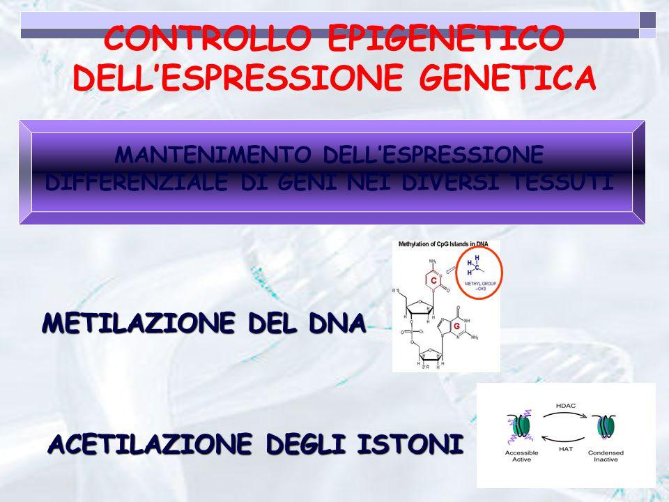 CONTROLLO EPIGENETICO DELL'ESPRESSIONE GENETICA