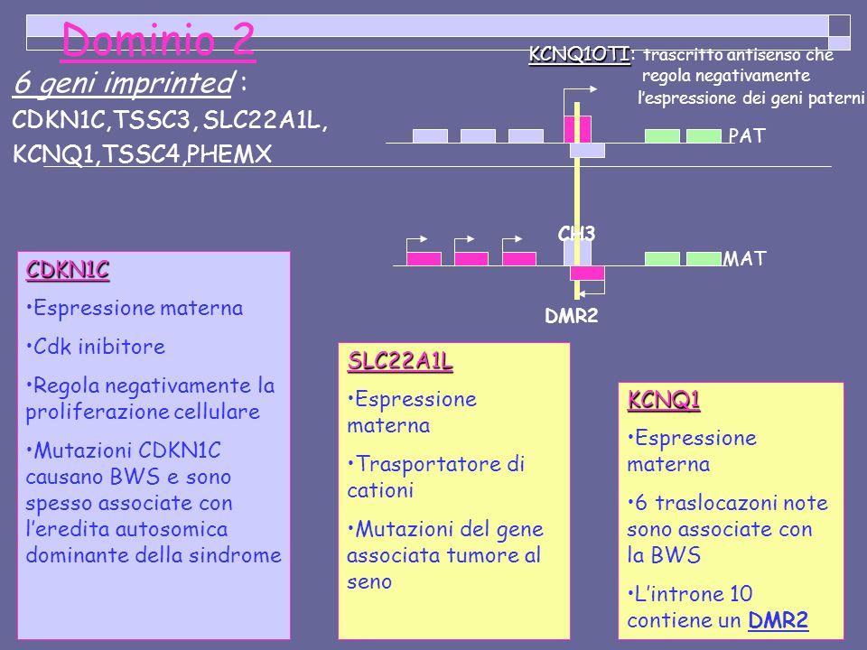 Dominio 2 6 geni imprinted : CDKN1C,TSSC3, SLC22A1L, KCNQ1,TSSC4,PHEMX